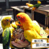 鳥とふれあえるってレベルじゃねーぞ-掛川花鳥園