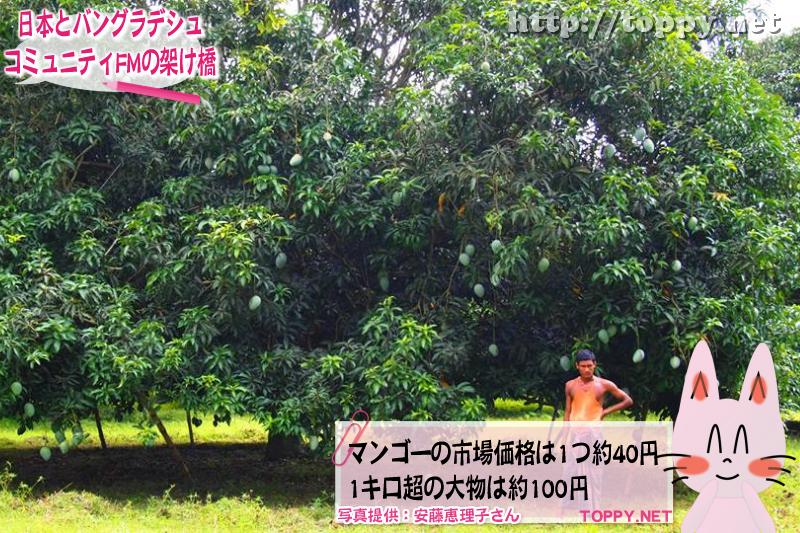 マンゴーの市場価格は1つ約40円 1キロ超の大物は約100円