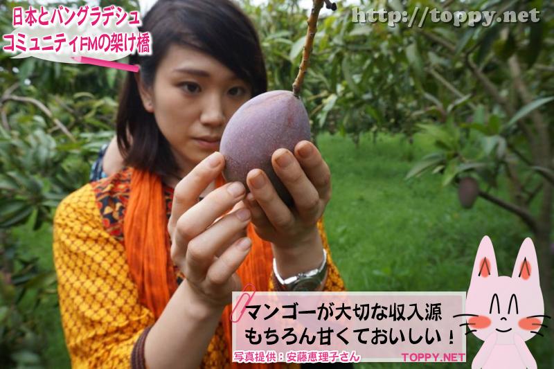 マンゴーが大切な収入源 もちろん甘くておいしい!